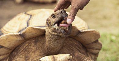cuidados de las tortugas terrestres