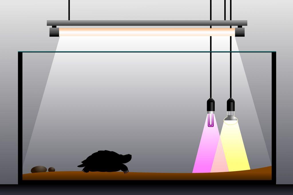 importancia de la luz uv en los terrarios