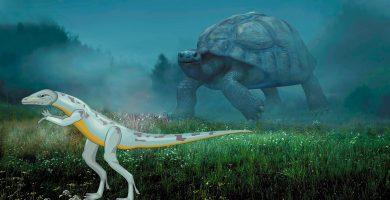 origen y clasificación de las tortugas