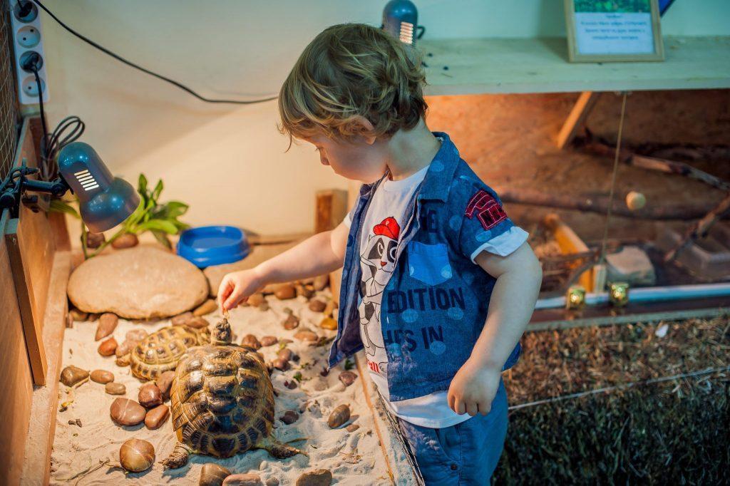comprar terrario para tortugas