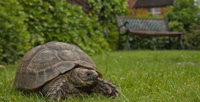 tortuga en un jardin