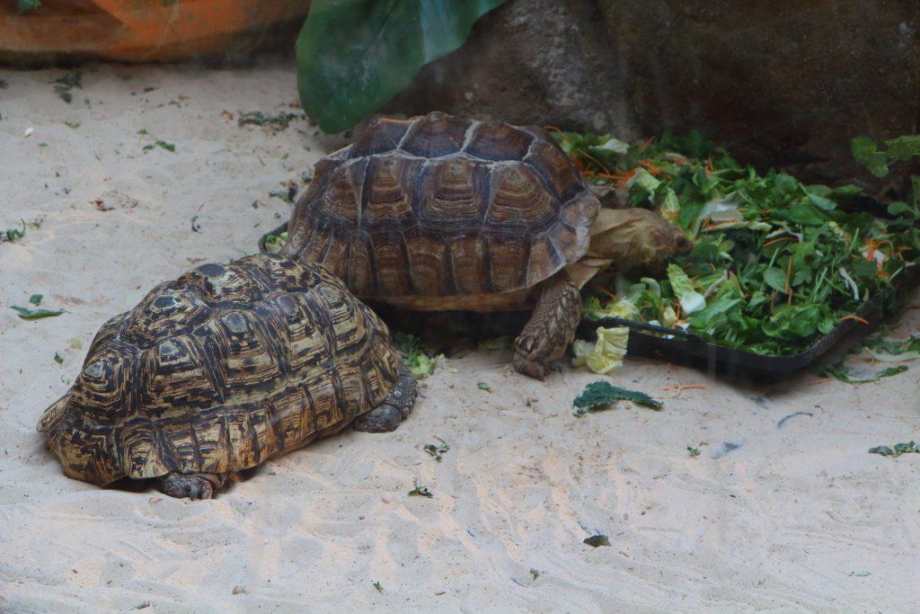 diferentes especies de tortuga
