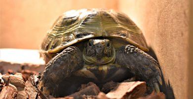 tortuga cuarentena