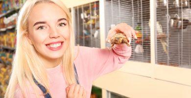 comprar tortuga