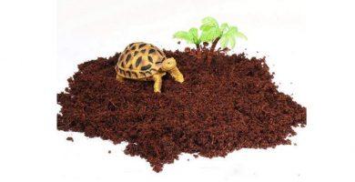arenas y sustratos para tortugas
