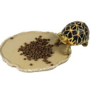 comederos para tortugas